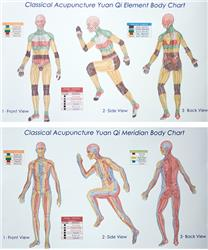 Classical Acupuncture Yuan Qi Body Charts - Trio Series (8.5